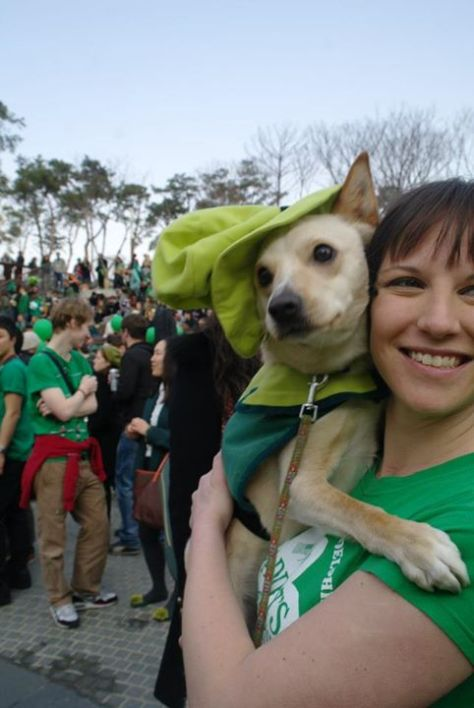 green dog st patricks day